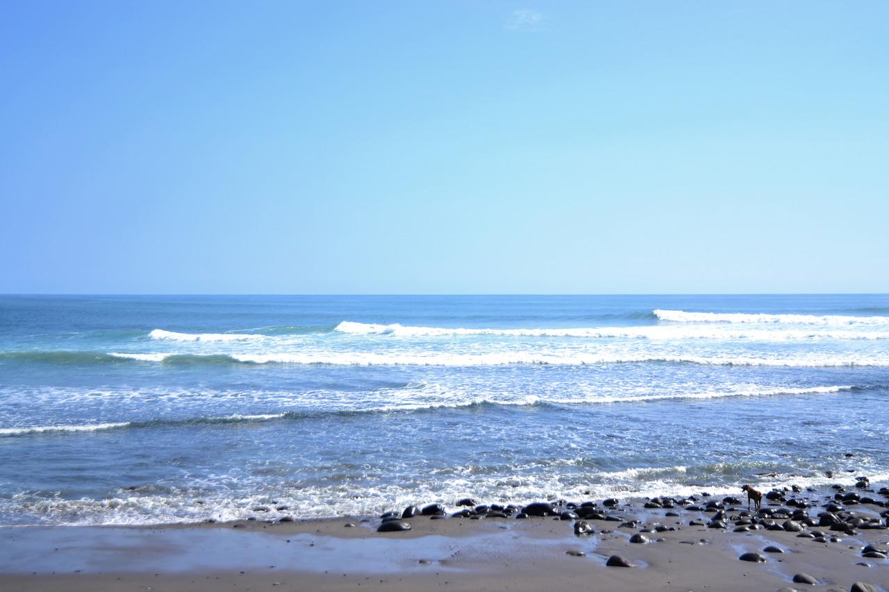 surf100comentarios